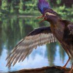 Les oiseaux : une fascinante épopée évolutive